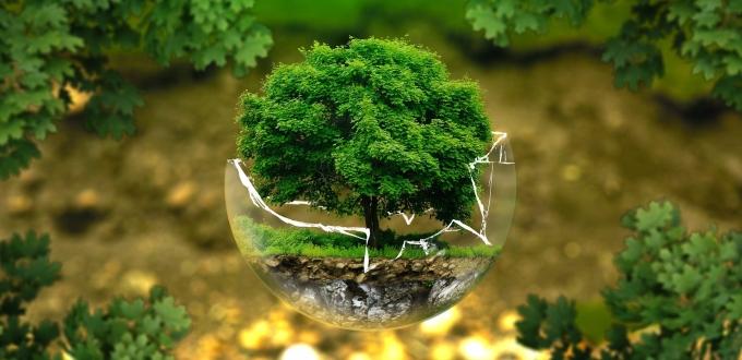 Baum in einer halben, zersplitterten Glaskugel
